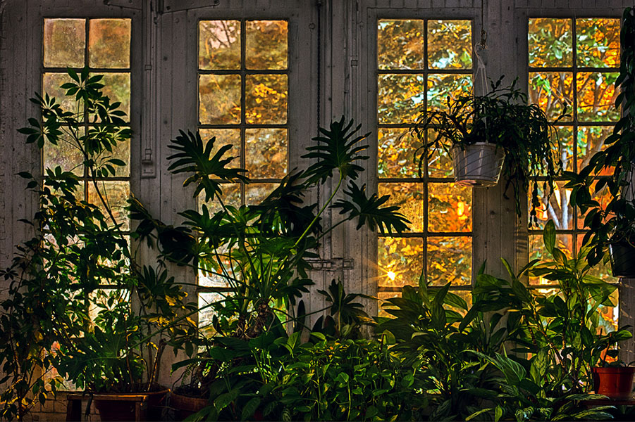 Flame Colored Trees Framed in Brooklyn Factory Window and Houseplants