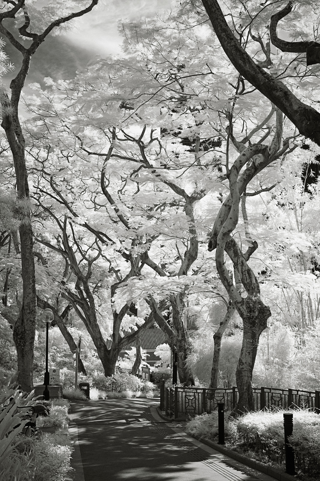 Backlit Infrared Path and Trees in the Hong Kong Zoological and Botanical Gardens.