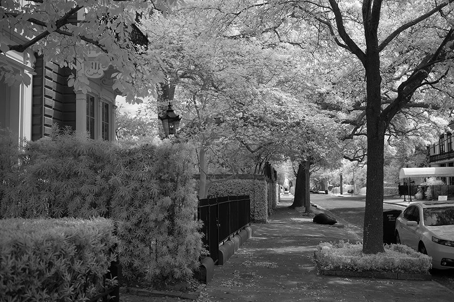 Sidewalk with Lush Vegetation in Infrared.