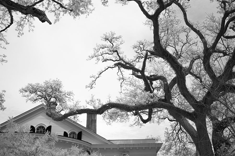 Big Cancy House Roof and Framing Trees in Infrared.