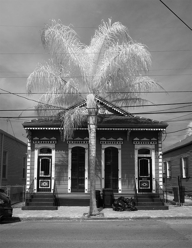 Double Shotgun House with Palm in Infrared.