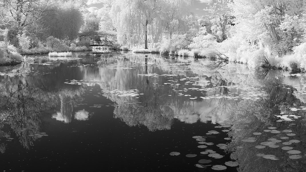 Infrared Panorama of Monet's Pond, Bridge, and Water Lily Pads.