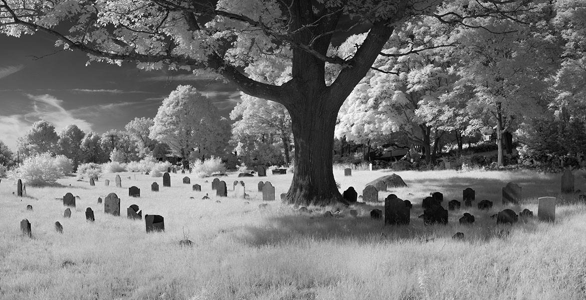 Infrared Panonramic Photo of Tree Amongst Old Headstones.
