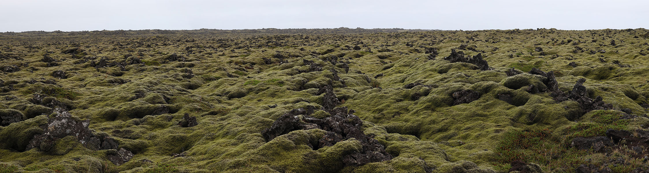 Cloudy Day Photo of Jagged Lava Field in Iceland Covered with Thick Softening Moss.