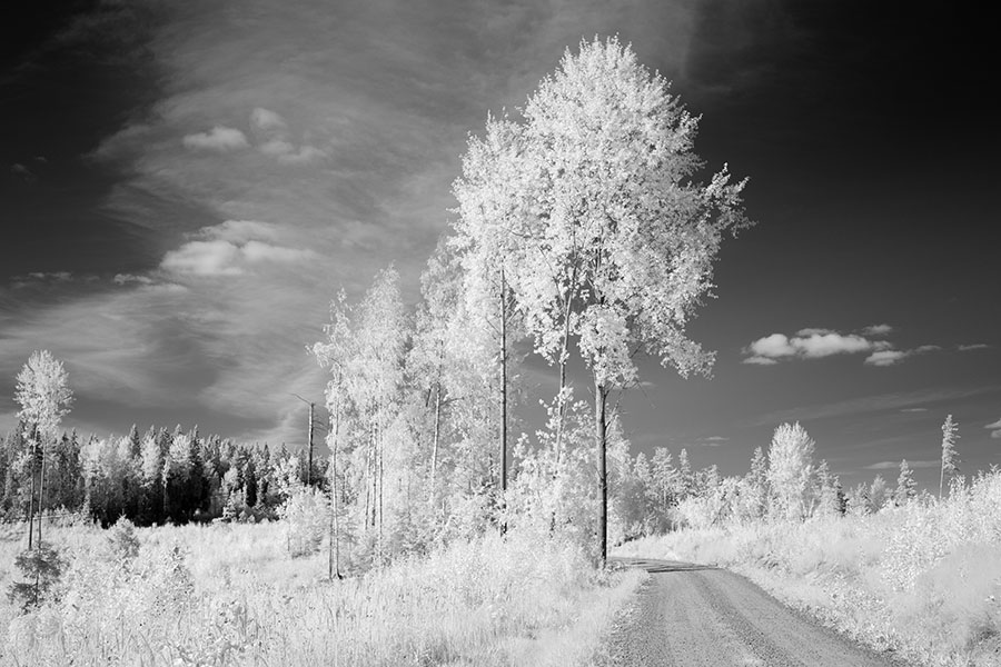 Infrared Photograph of Meadow, Trees, and Forest in Central Finland.