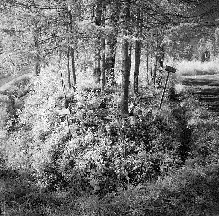 Infrared Photograph of House Signs at a Junction in Finnish Birch Forest
