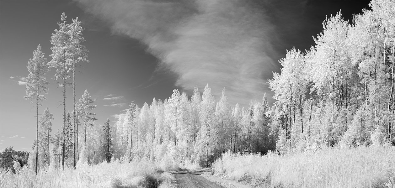 Infrared Panorama of Meadow, Gravel Road and Birch Forest, Central Finland.