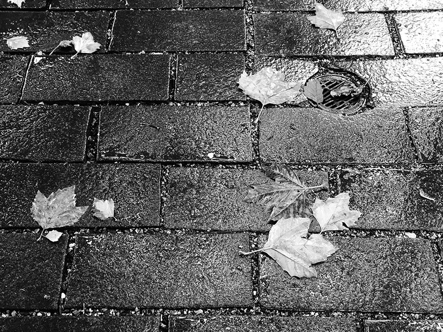 Black and White Photo of Wet Autumn Leaves on Wet Pavement.