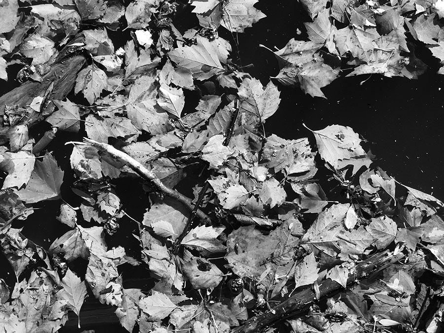 Black and White Photo of Autumn Leaves Floating in Water.