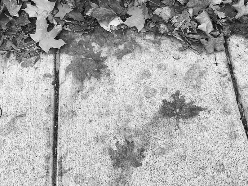 Black and White Closeup Image of an Autumn Leaf on Sidewalk.