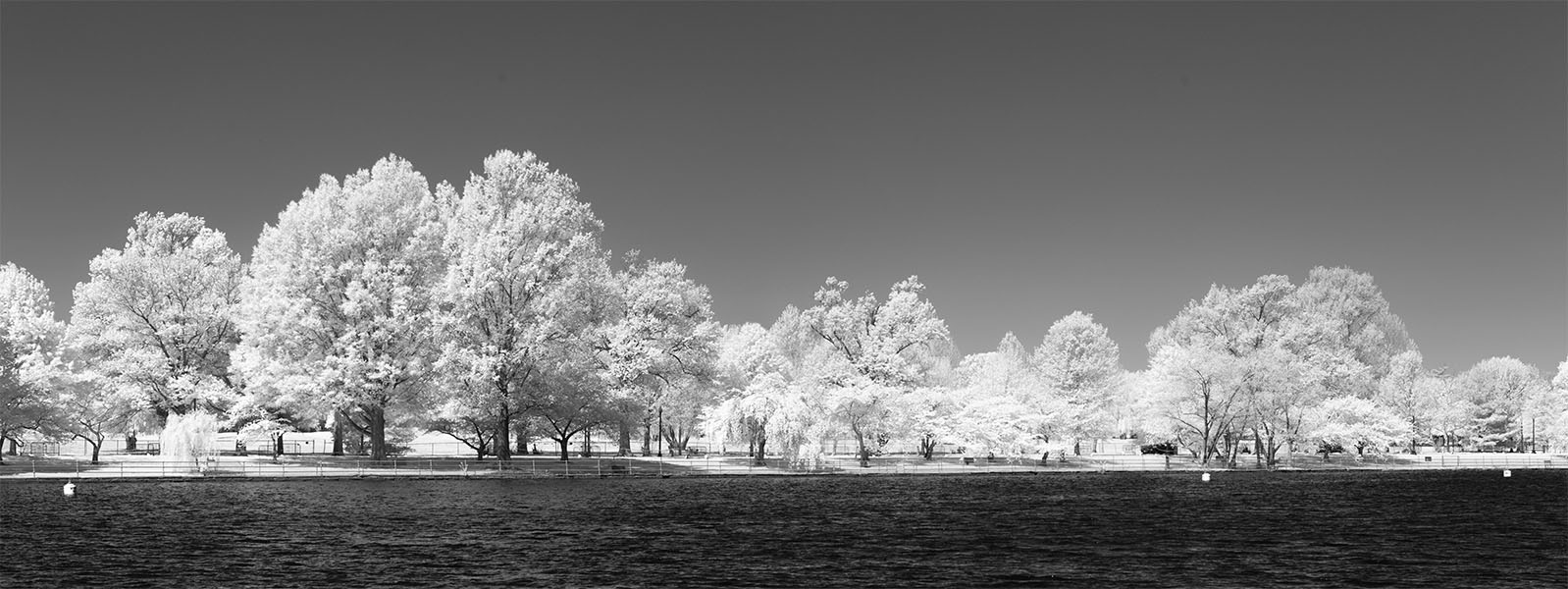 Water and Trees in Infrared