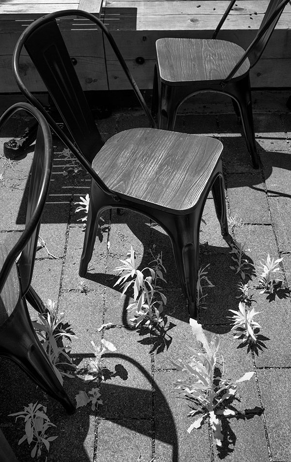 Infrared Photo of Café Seats and Weeds