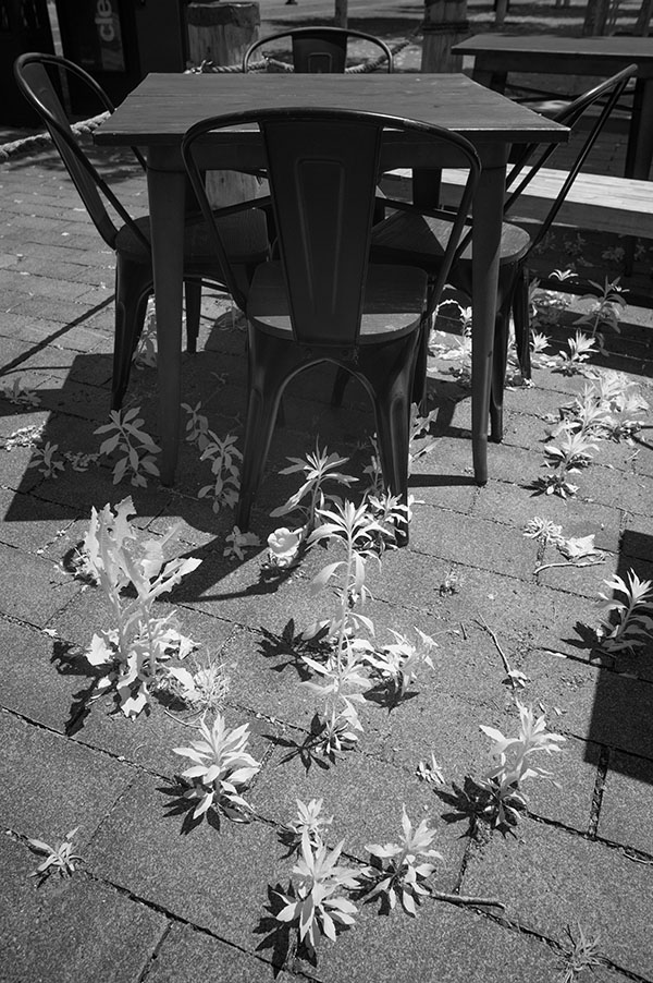 Infrared Photo of Outdoor Restaurant Seating with Weeeds Growing Between Paving Blocks.